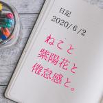 【日記】2020/6/2 ねこと紫陽花と倦怠感と。