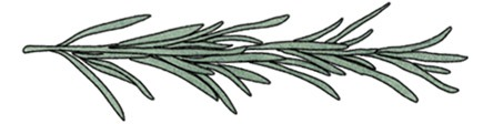 Spot illustration of a rosemary sprig | Italian Food Illustrations of Cheese, Pasta, & Desserts by food and travel illustrator Yaansoon: Posters, Roll-Up Banners, and Menus Commissioned by The Italian Trade Agency (Agenzia ICE) for the Italian Culinary Week (Settimana della Cucina Italiana nel mondo) | Illustration Commission | Italian Taste, Cucina Italiana, Italian ingredients, DOP & IGP EU certified foods