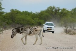 True meaning of zebra crossing