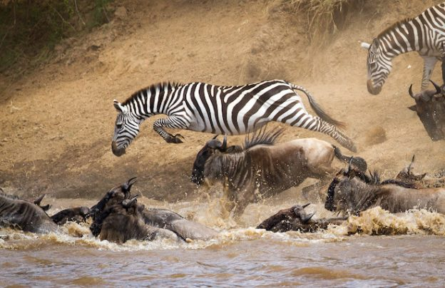 Mara-Crossing-Great-Wildebeest-Migration-_-Ker-_-Downey-Africa-624x404
