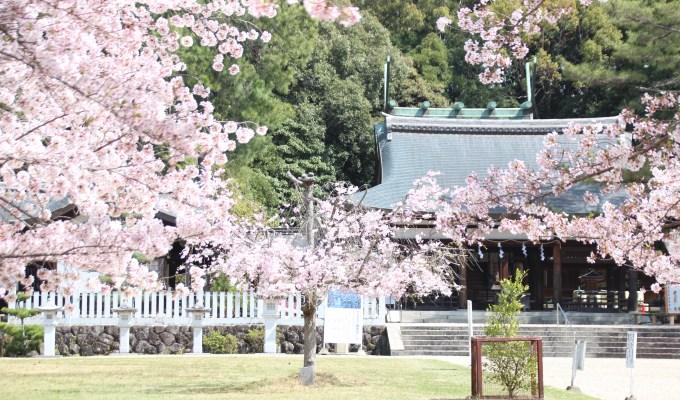 [3月下旬-4月上旬]奈良 奈良縣護國神社 護國の櫻
