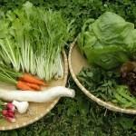お野菜さんたち