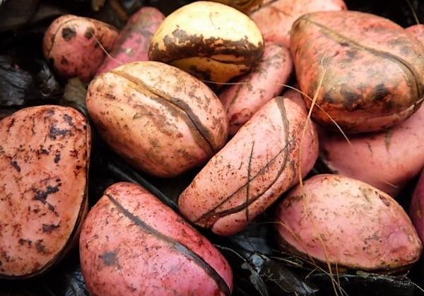 Obi Abata = Kola Nuts    - Chief Yagbe Awolowo Onilu