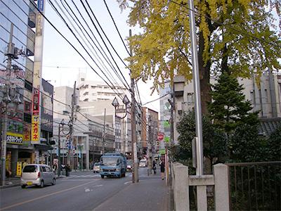 イチョウの木と神社