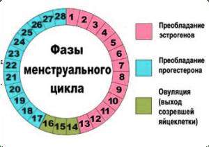 2b763654006 Sellisel juhul saab ovulatsiooni arvutada sõna otseses mõttes oma peaga,  teades teie tsükli päevade täpse arvu.