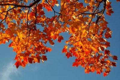 leaves-228158_1280