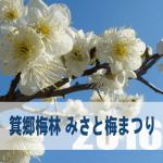 箕郷梅林みさと梅まつり2017年の開花状況。場所とアクセス方法
