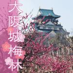 大阪城の梅林公園。2018年の開花状況は?見ごろとアクセス情報