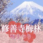 修善寺の梅まつり2018に行こう!梅林の開花状況と見どころ