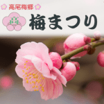 高尾梅郷の梅まつり2019年の開花状況は?見ごろはいつ?