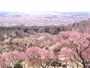 tsukubayama_ume_fes_002