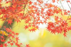takaosan_autumn_leaves_2015_002