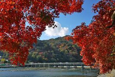 嵐山の紅葉ライトップの今年の見頃の時期を予想しました。