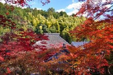 arashiyama_autumn_leaves_2015_002