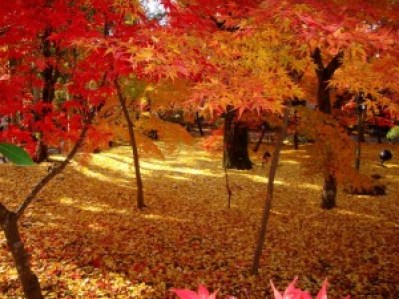 autumn_eikando_2015_001