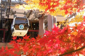 hakone_autumn_leaves_005