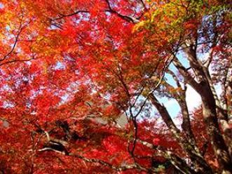 kiyomizudera_autumn_leaves_2015_002
