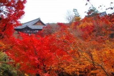 sightseeingtourism_tofukuji_001