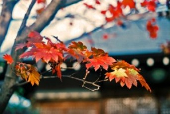 sightseeingtourism_tofukuji_003