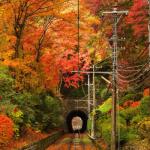 高尾山の紅葉2016!見ごろ時期と混雑状況。おすすめ鑑賞コース