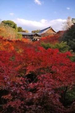 東福寺の紅葉の見ごろとライトアップ時間。拝観料と混雑状況を調べました。