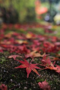 atumun_leaves_okutama_003