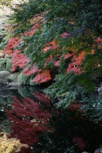 atumun_leaves_shinjyukugyoen_004
