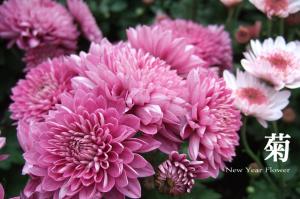 newyear_flower_011