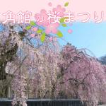 角館桜開花予想と桜まつり2018。見頃の時期は?駐車場と混雑状況