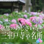 京都のあじさい寺。三室戸寺の見頃はいつ?名所と開花状況2018