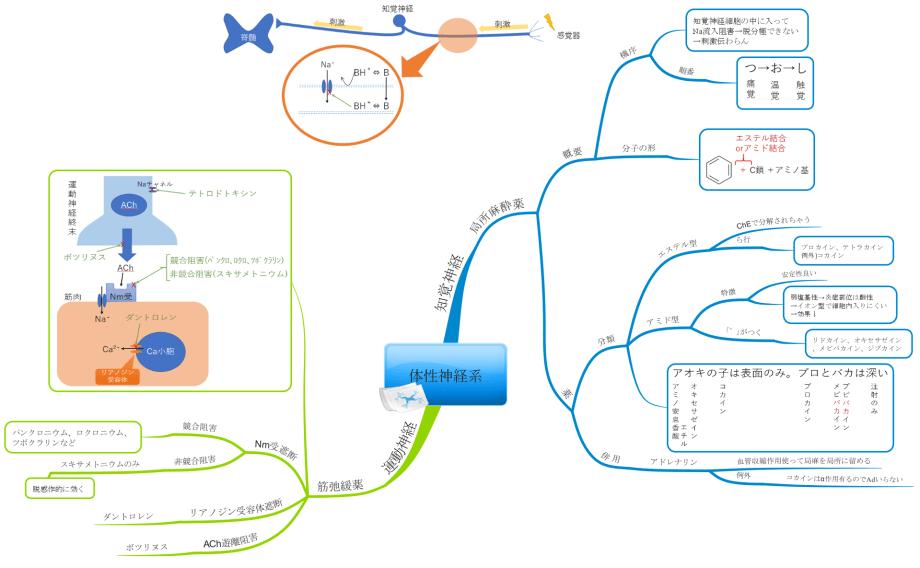 体性神経系のマインドマップ
