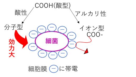 保存料 酸型 分子型 イオン型 強さ