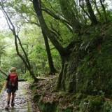屋久島で『半日でできる観光』のご紹介(ドライブ/トレッキング/雨の日)