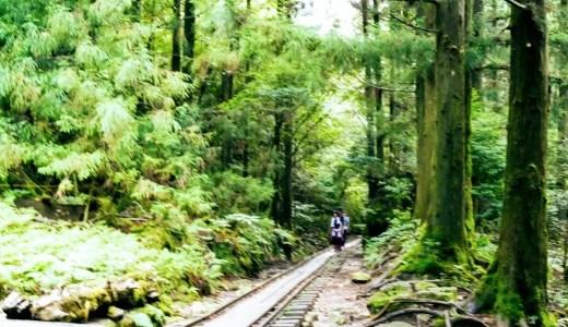 東京から【屋久島の縄文杉への行き方】まとめ