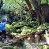 屋久島2泊3日 モデルコース(白谷雲水峡のんびり森歩きタイプ)