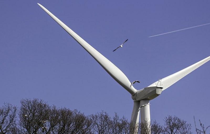 Wind turbine with birds