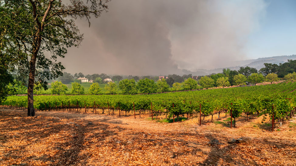 Napa Valley drought and wildfire