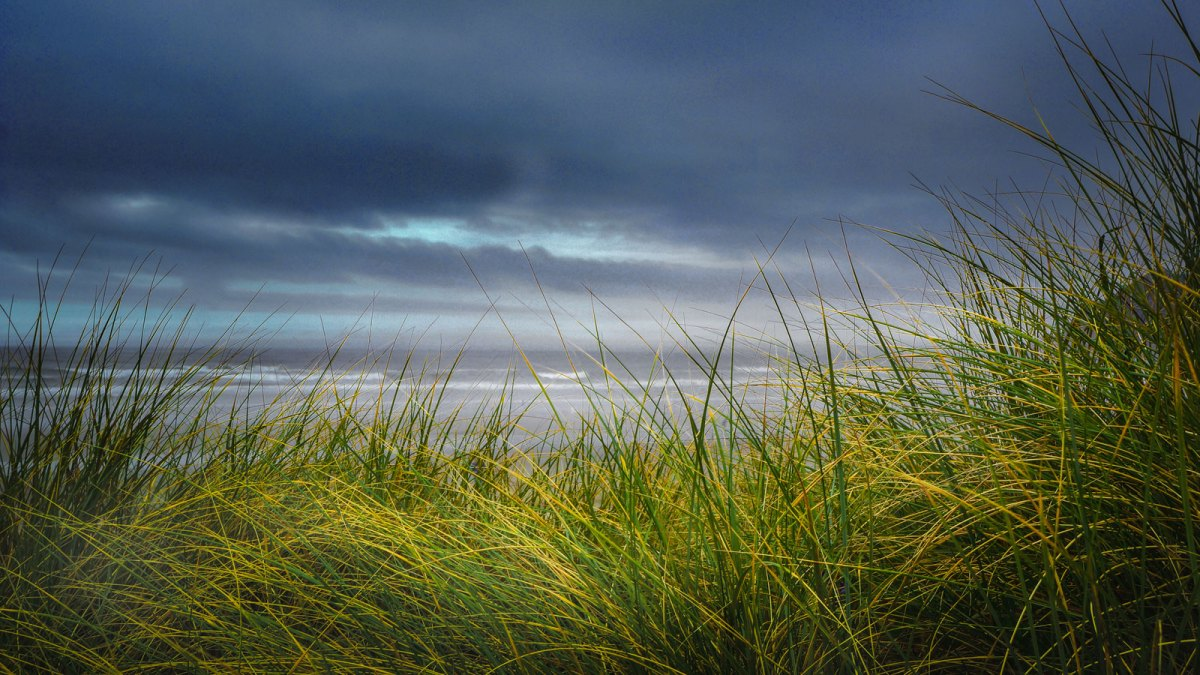 Coastal seagrass