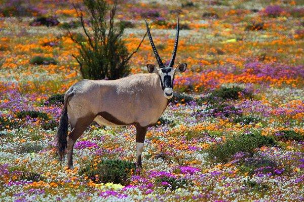 محمية ناماكوالند