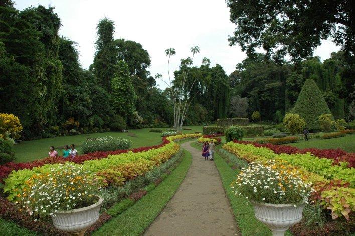 نتيجة بحث الصور عن حدائق النباتات الملكية كاندي