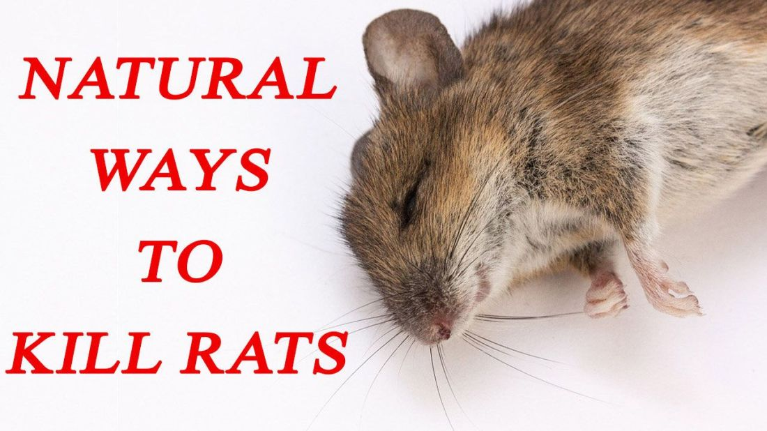 how to get rid of mice in attic without killing them