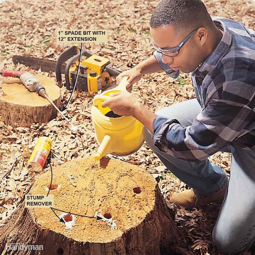 Bush pruning tips for healthier bushes tree stump how