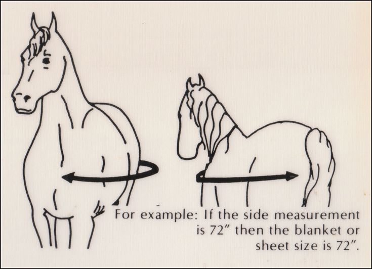 How to measure for and choose a horse blanket horse