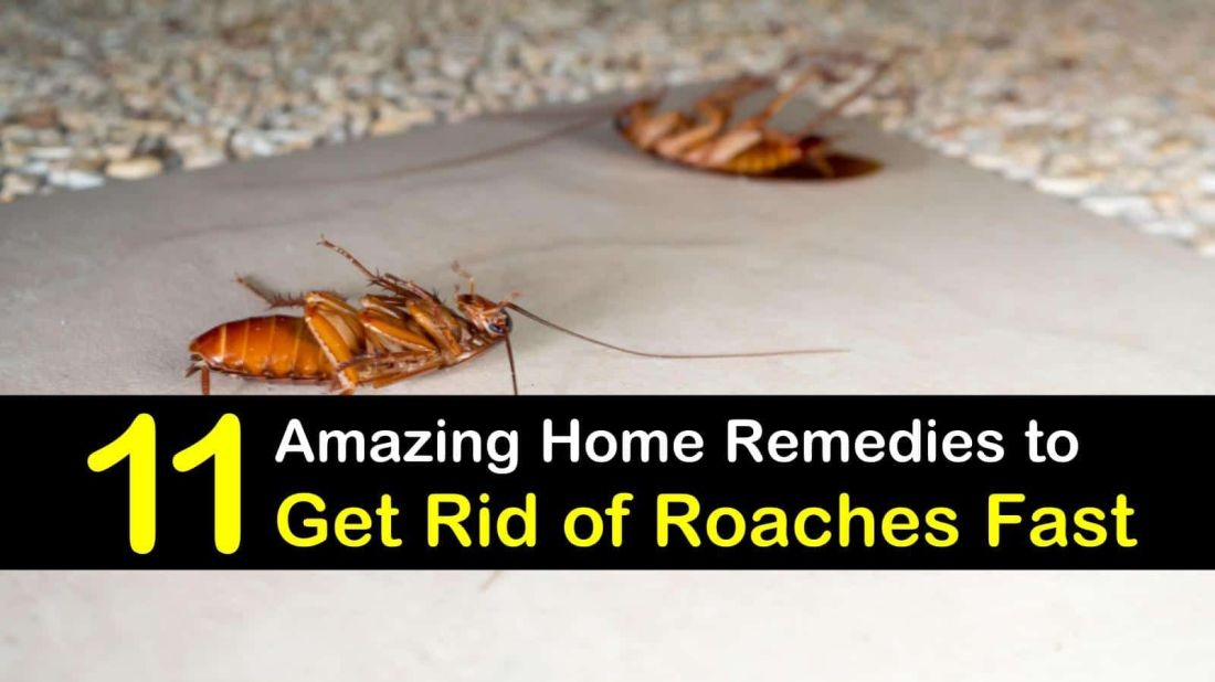 11 amazing solutions to get rid of roaches fast