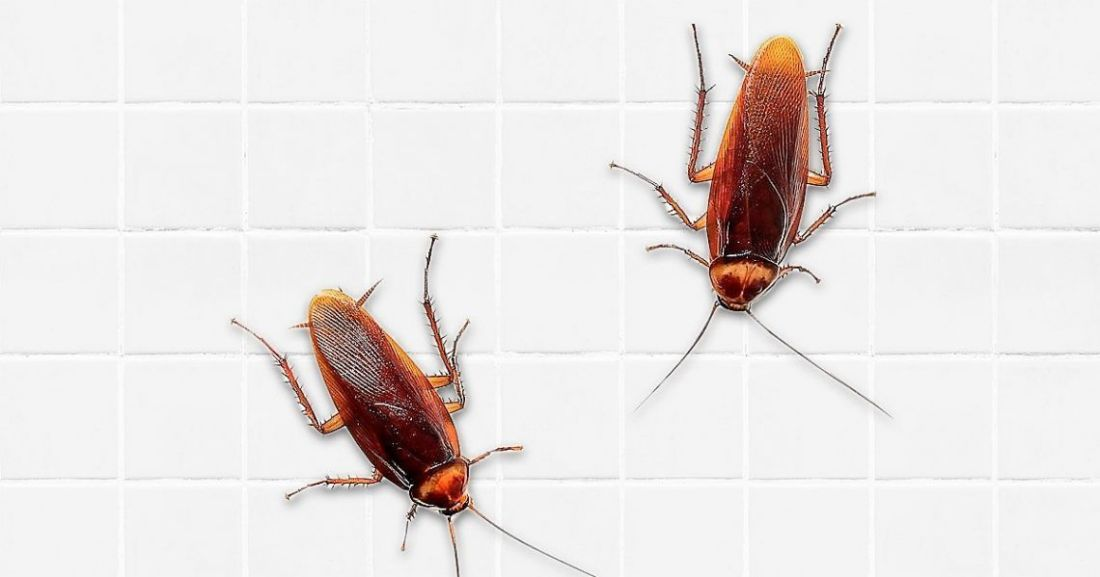 how to get rid of cockroaches in car singapore