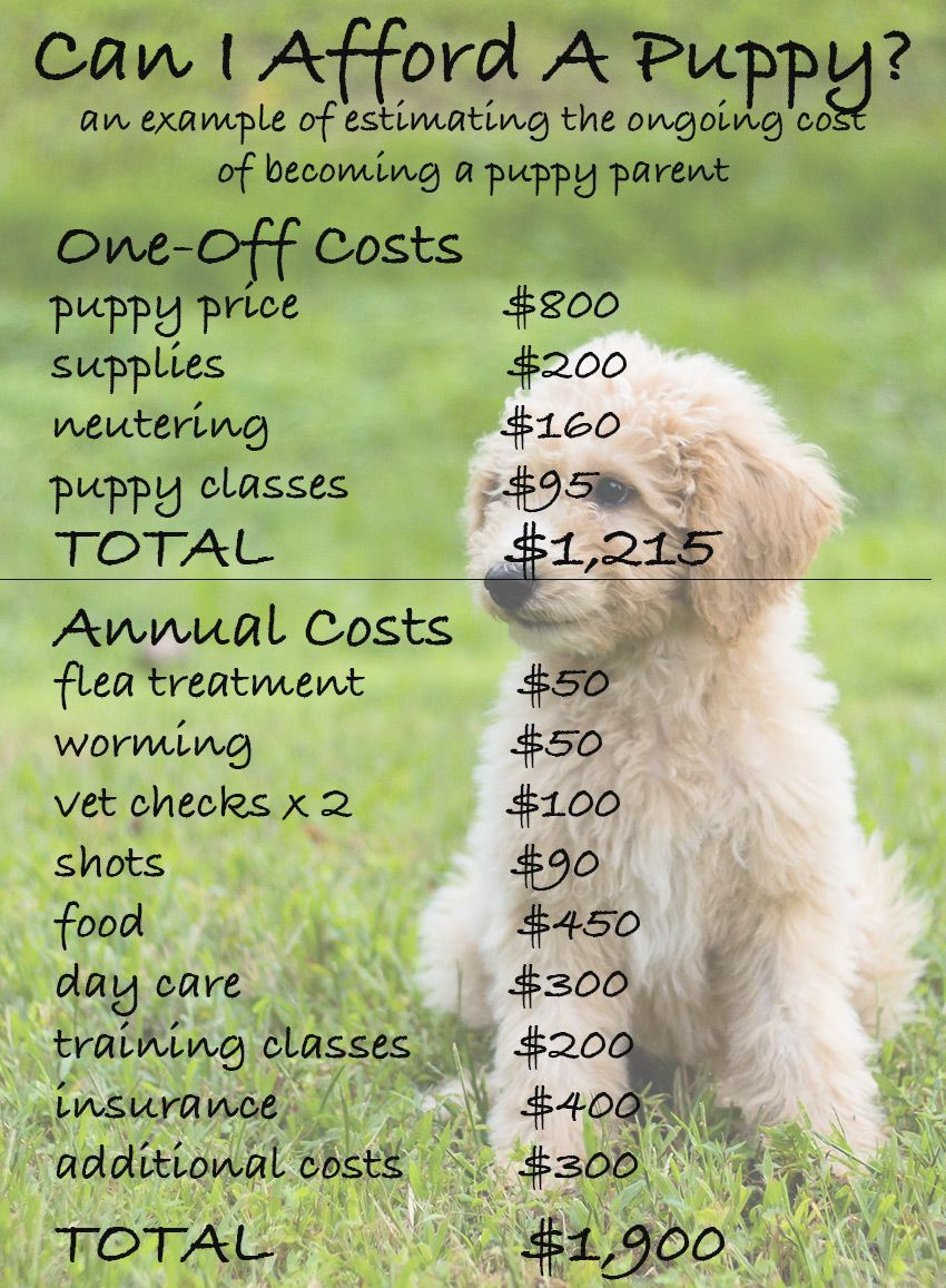 How much does a dog cost the costs of buying and owning a