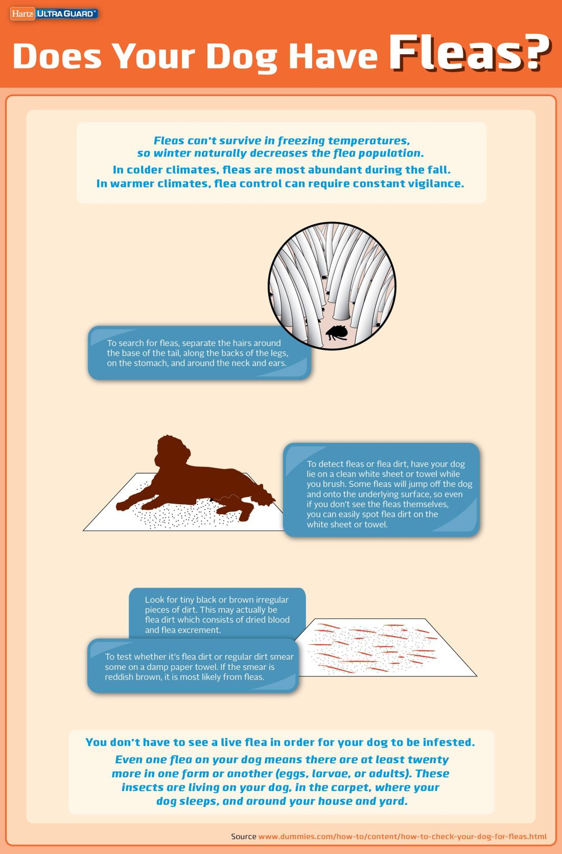 Do you know how to check your dog for fleas stay up to