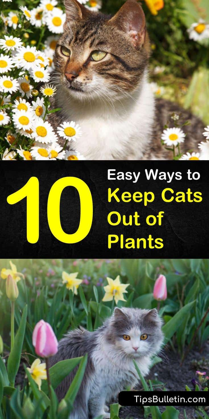 how to keep cats away from garden plants