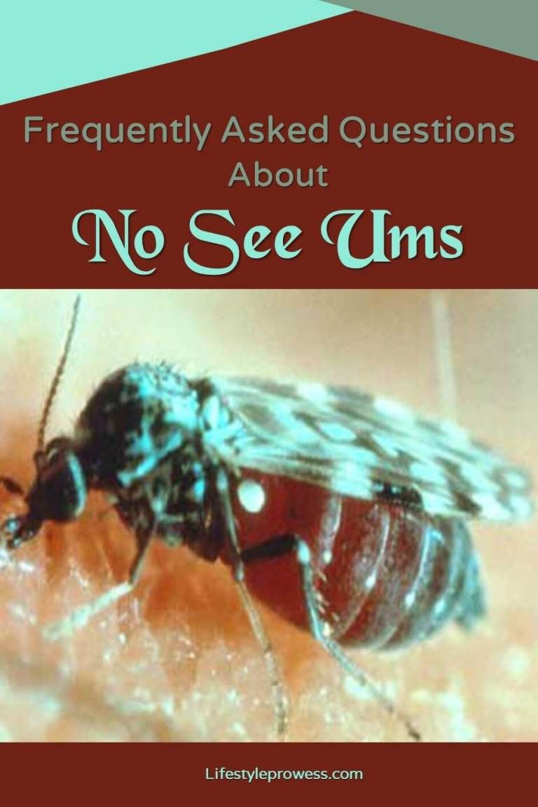 Frequently asked questions about no see ums this or that