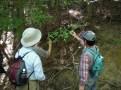 樹木の観察2